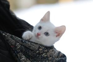 『猫侍』主役猫・あなごの萌えDVD発売&未公開写真公開!「我が道よ 2016」MVも解禁
